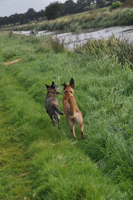 Survival voor Baas en Hond 2012 - DSC_0040.JPG