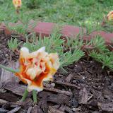 Gardening 2010 - 101_1516.JPG