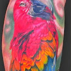 Parrot Tattoos Pictures - tattoo designs