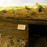 ancient Dutch hut in which people lived while constructing the North-sea-canal in Velsen, Noord Holland, Netherlands