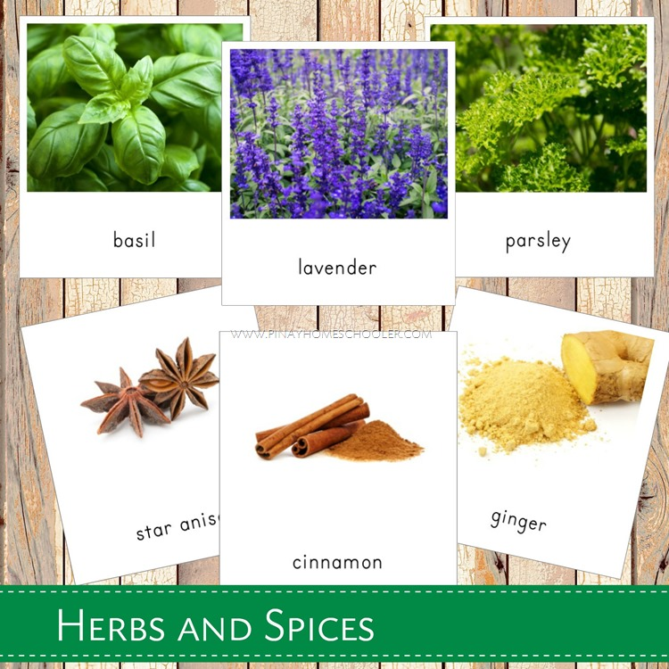 Montessori Inspired Herbs and Spices 3 Part Cards