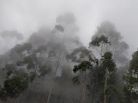 Kabut, Sebuah Tekad, dan John Muir