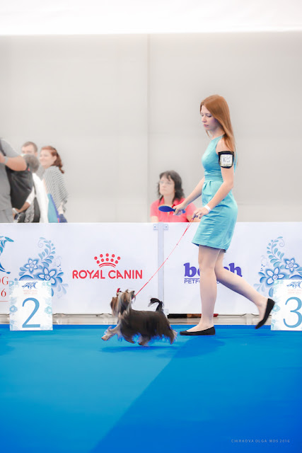 World Dog Show-2016 0057