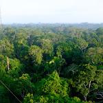 Amazing rainforest canopy boardwalk amazing birds and sounds