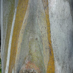 Alpine tree trunk (276545)