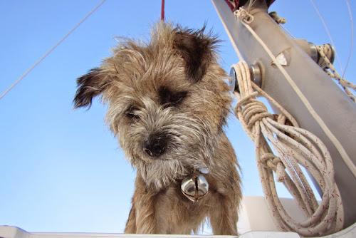 Luna The Boat Dog