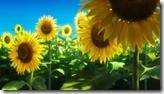 [JnMBS] Harmony - 01 [BD][720p AVC AAC][7269974B].mkv_snapshot_00.01.45_[2016.05.22_14.01.21]