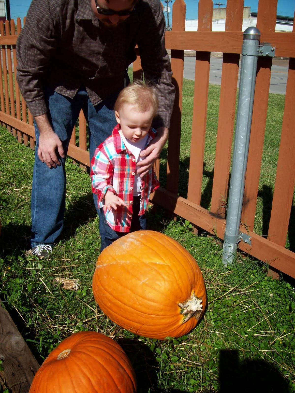Pumpkin Patch - 114_6528.JPG