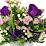 County Line Rose Florist 2's profile photo