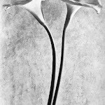 Tina-Modotti-Calle-1927.jpg