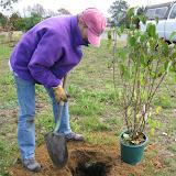Hammo Planting - Shannon Schiesser - IMG_4914.JPG