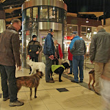 KNON puppys in de stad nov 2008 - in%25252520de%25252520stad.jpg