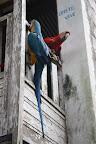Macaws at the Coca Plantation (Manu National Park, Peru)
