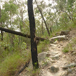 Rough rocky track in the Berowra Valley (333401)