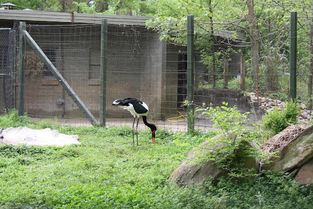 Zoo Snooze 2015 - IMG_7244.JPG