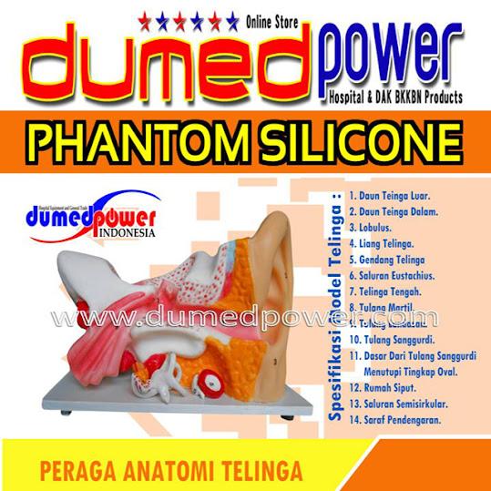 Phantom-Alat-Peraga-Anatomi-Telinga-Dumedpower