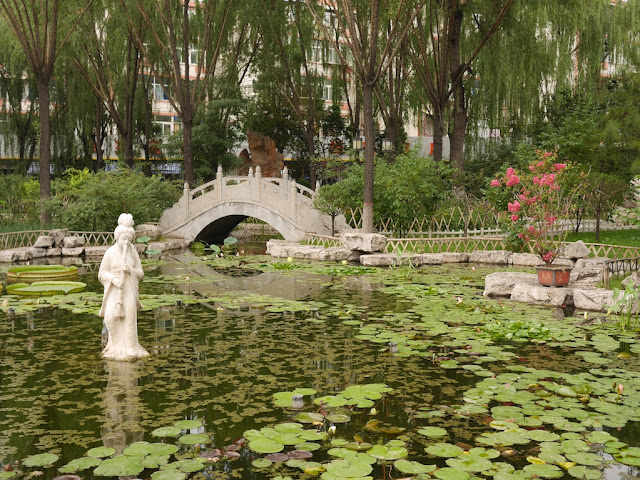 water lily pond at Wenying Park in Taiyuan