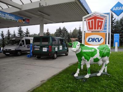 Biogazowa krówka przy jednej ze stacji CNG w Niemczech