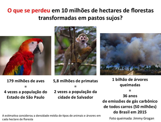 What was lost when 10 million hectares of Amazon rainforest was turned into dirty pastures? 179nmillion birds, 5.8 million primates, and 1 billion trees. Graphic: Paulo Barreto