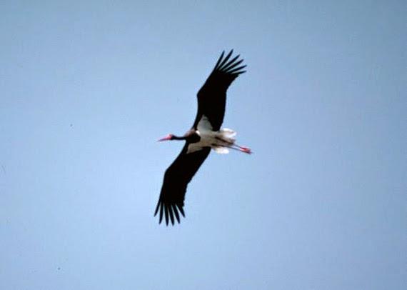 El Birding o Birdwatching, un segmento turístico que seduce cada vez más