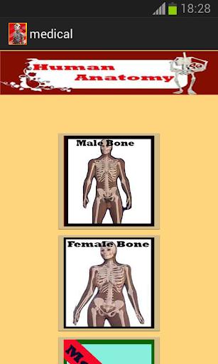 3D Human Anatomy Skeletal