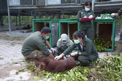 Pandemi Covid-19, Yayasan BOS Terapkan SOP Baru