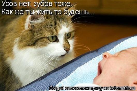 1414135106_kotomatricy-7