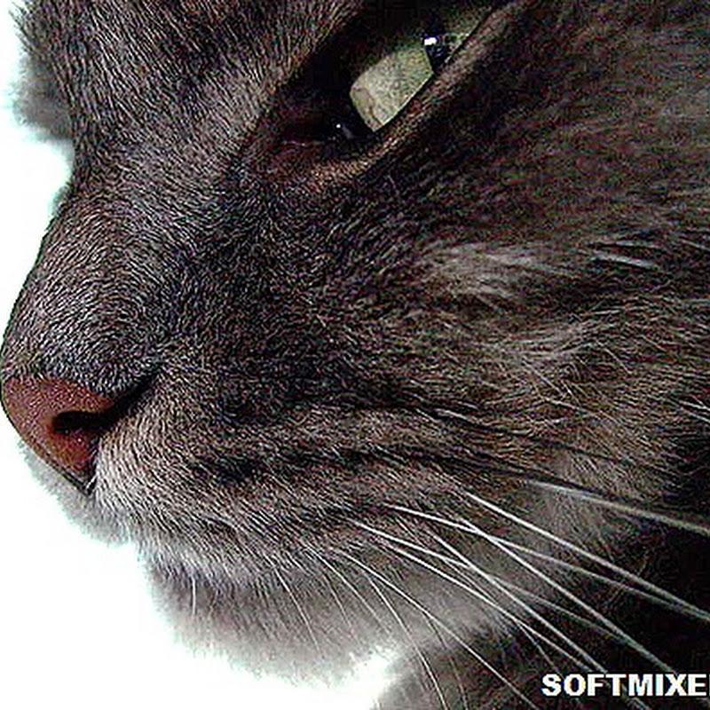 Правда ли, что коты - бессовестные эгоисты?