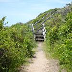 Timber steps on the coastal walk in the Wallarah Pennisula (387884)