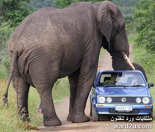 حيوانات خطيره قاتله للبشر
