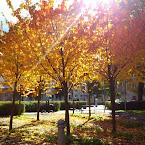 20121005-01-autumn-colour-light.jpg