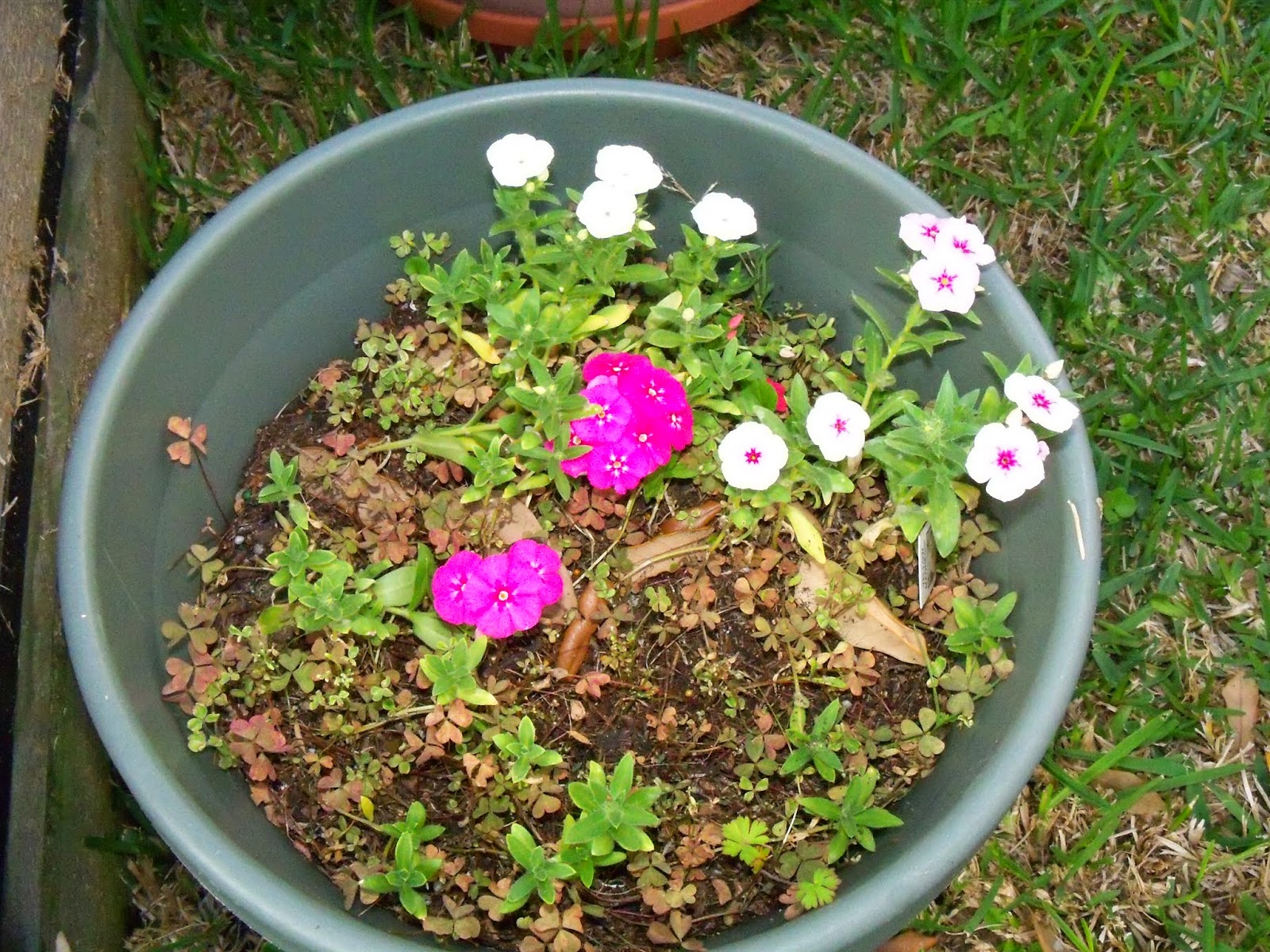 Gardening 2015 - 116_7695.JPG