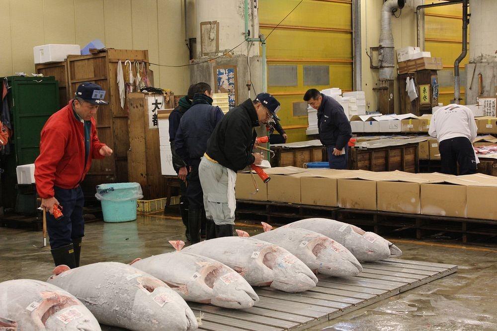 tsukiji-fish-market-13