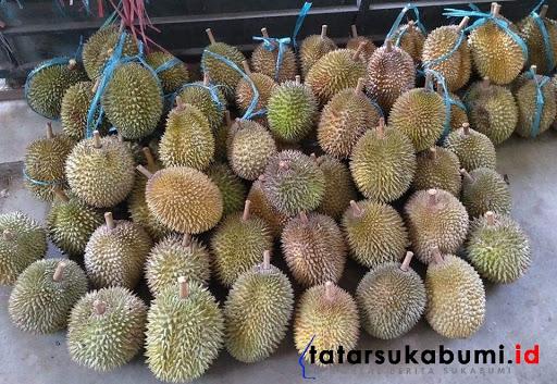 Icip-icip Durian Gandaria Asli Sukabumi, Sisa Peninggalan Kolonial Belanda Harga 500 Ribu Perbuah