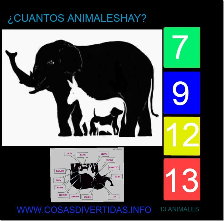 ANIMALES 13 (2)