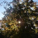 Por entre las ramas