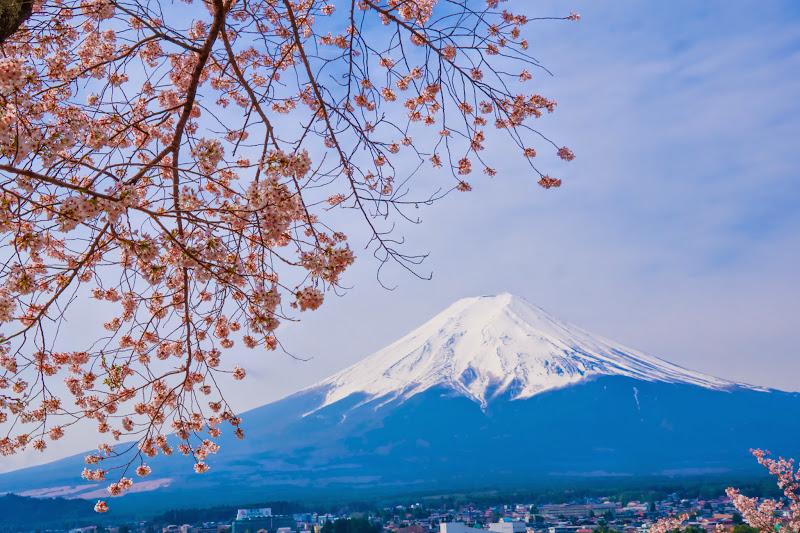 新倉富士浅間神社 桜 富士山 写真1