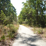 Eucalypt forests in Green Point Reserve (402982)