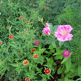 Gardening 2010, Part Two - 101_3308.JPG