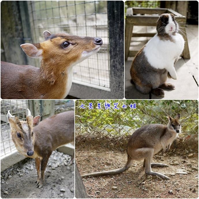 10兔子、三羌、袋鼠