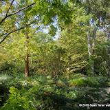 10-26-14 Dallas Arboretum - _IGP4313.JPG