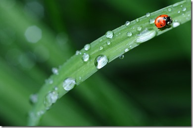 animal-dew-drop-of-water-40731