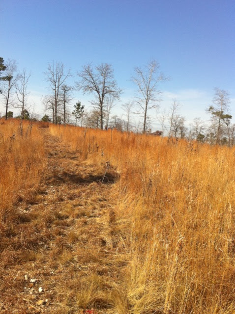 Hunting Habitat 9, Anderson Creek