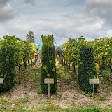 Petites vendanges 2017 du chardonnay gelé. guimbelot.com - 2017-09-30%2Bvendanges%2BGuimbelot%2Bchardonay-173.jpg