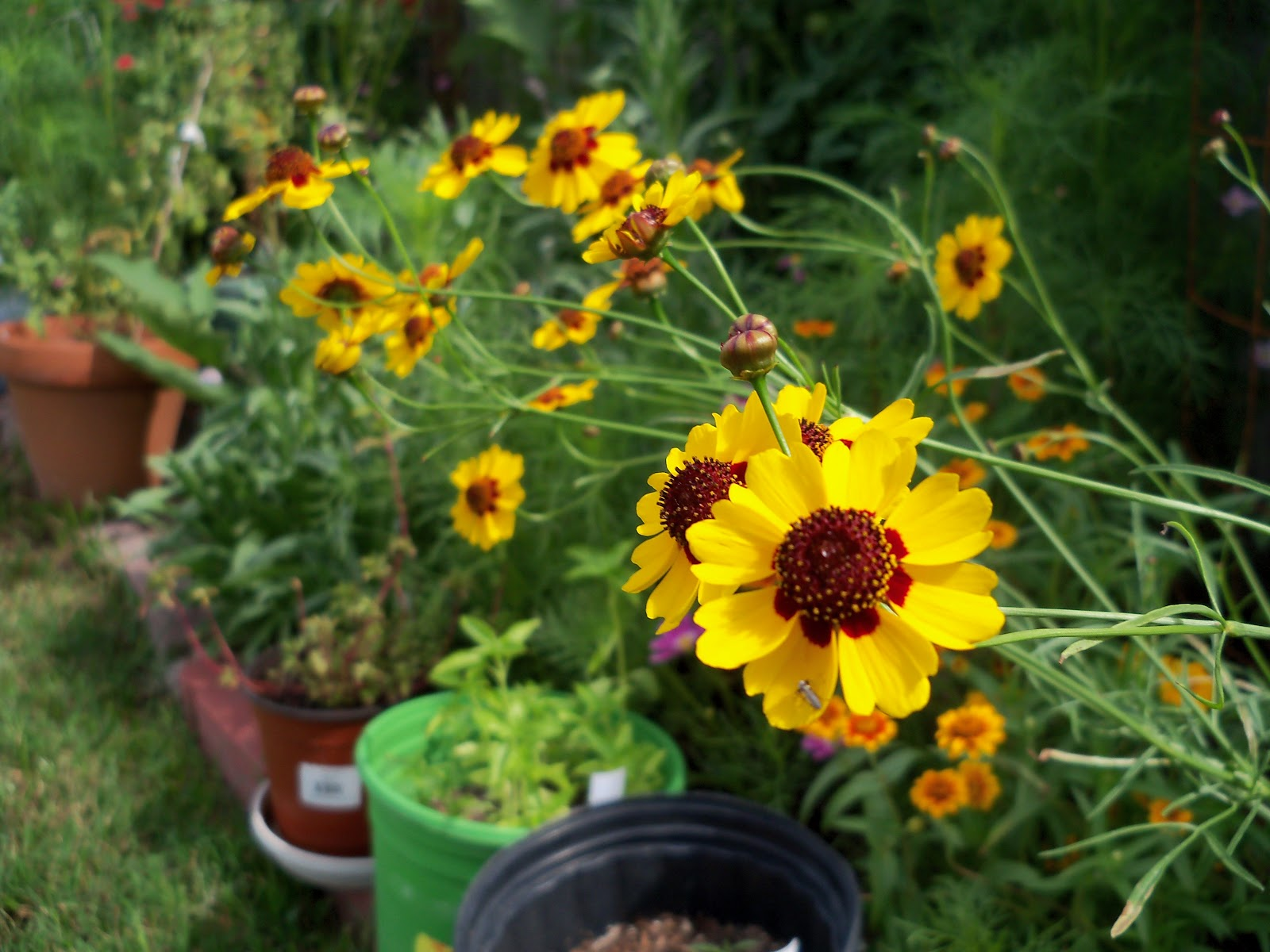 Gardening 2010, Part Three - 101_3758.JPG