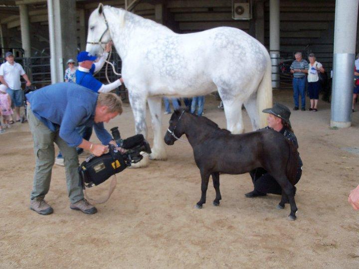the biggest horse in the world 2013 wwwpixsharkcom