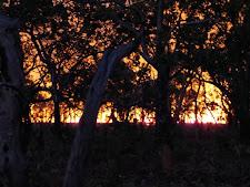Bush fire at night