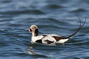 [bayoffundy.ca-SEABIRDS-40-Good-reaso%5B3%5D]