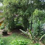 Tunda Loma Lodge à Calderon (San Lorenzo, Esmeraldas), 27 novembre 2013. Photo : J.-M. Gayman