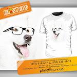 Dog_glass_.jpg